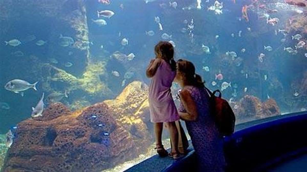 7 ενυδρεία και θαλάσσια πάρκα στην Ελλάδα που πρέπει να επισκεφθείτε με το παιδί