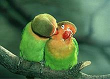 Έρωτες στο ζωικό βασίλειο