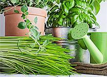 Πώς να φυτέψετε βότανα και μυρωδικά στη βεράντα σας