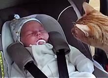 Τι συμβαίνει όταν μια γάτα και ένα μωρό συναντιούνται; Δείτε το ξεκαρδιστικό βίντεο!
