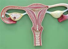 Όσα δεν ξέρετε για το αναπαραγωγικό σύστημα της γυναίκας!