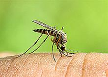 Ποιους τσιμπούν τα κουνούπια; Οι επιστήμονες απαντούν και συμβουλεύουν