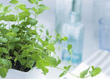 8 μυρωδικά που μπορείτε να φυτέψετε στην κουζίνα σας
