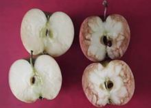 «Το χτυπημένο μήλο»: Το κόλπο που σκέφτηκε μια δασκάλα για να διδάξει τον πόνο που προκαλεί το bullying