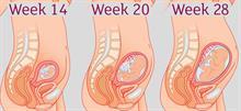 Β τρίμηνο εγκυμοσύνης: Τα στάδια εξέλιξης του μωρού εβδομάδα προς εβδομάδα