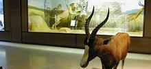 Ανοιχτό θα είναι αυτή την Κυριακή το Μουσείο Ζωολογίας του Πανεπιστημίου Αθηνών