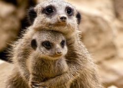Δωρεάν είσοδος για τα παιδιά όλο τον Φεβρουάριο στο Αττικό Ζωολογικό Πάρκο