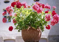 Τα 6 φυτά που πρέπει να έχετε μέσα στο σπίτι!