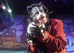 Κερδίστε 5 διπλές προσκλήσεις για την παιδική παράσταση «Η ιστορία του γάτου που έμαθε σ' ένα γλάρο να πετάει»