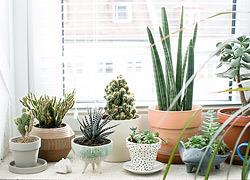 7 φυτά που χρειάζονται ελάχιστο πότισμα