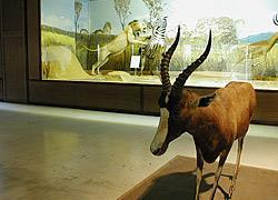 Αυτή την Κυριακή θα έχετε την ευκαιρία να επισκεφθείτε το Μουσείο Ζωολογίας του Πανεπιστημίου Αθηνών