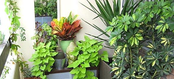 8 αθάνατα φυτά που πρέπει να έχετε στο μπαλκόνι σας