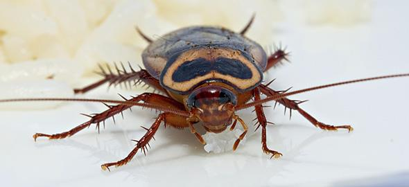 Πώς να απομακρύνετε τα έντομα απ' το σπίτι