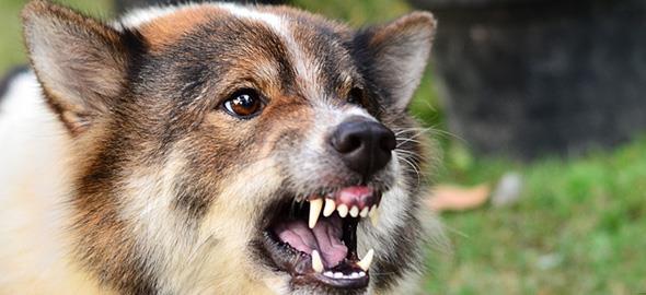 Πώς να προστατευτείτε από ένα άγριο σκυλί
