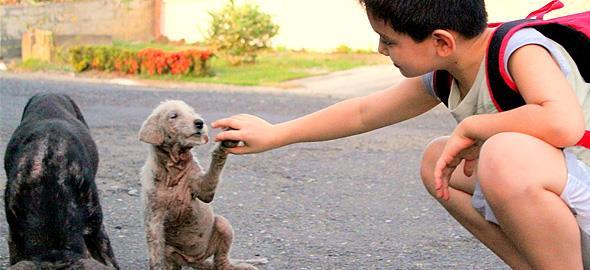 7 βιβλία που μαθαίνουν στα παιδιά να σέβονται και να προστατεύουν τα ζώα