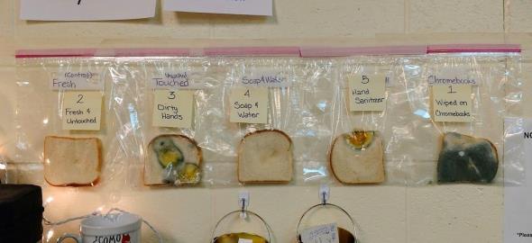«Το πείραμα του ψωμιού»:για να γίνει το πλύσιμο των χεριών αγαπημένη συνήθεια των παιδιών