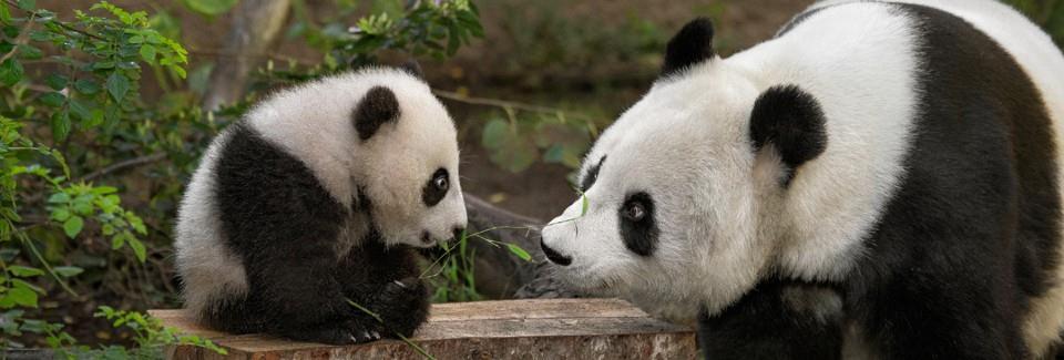 Επισκεφθείτε τους μεγαλύτερους ζωολογικούς κήπους του κόσμου απ' το σαλόνι σας!